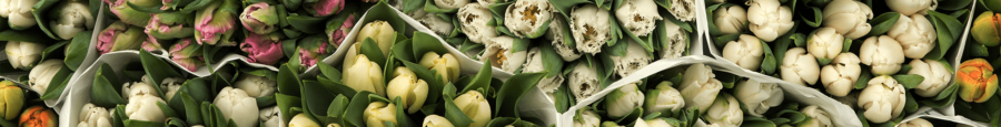 New Green Market is a new online trading platform for the trading of flowers and plants.